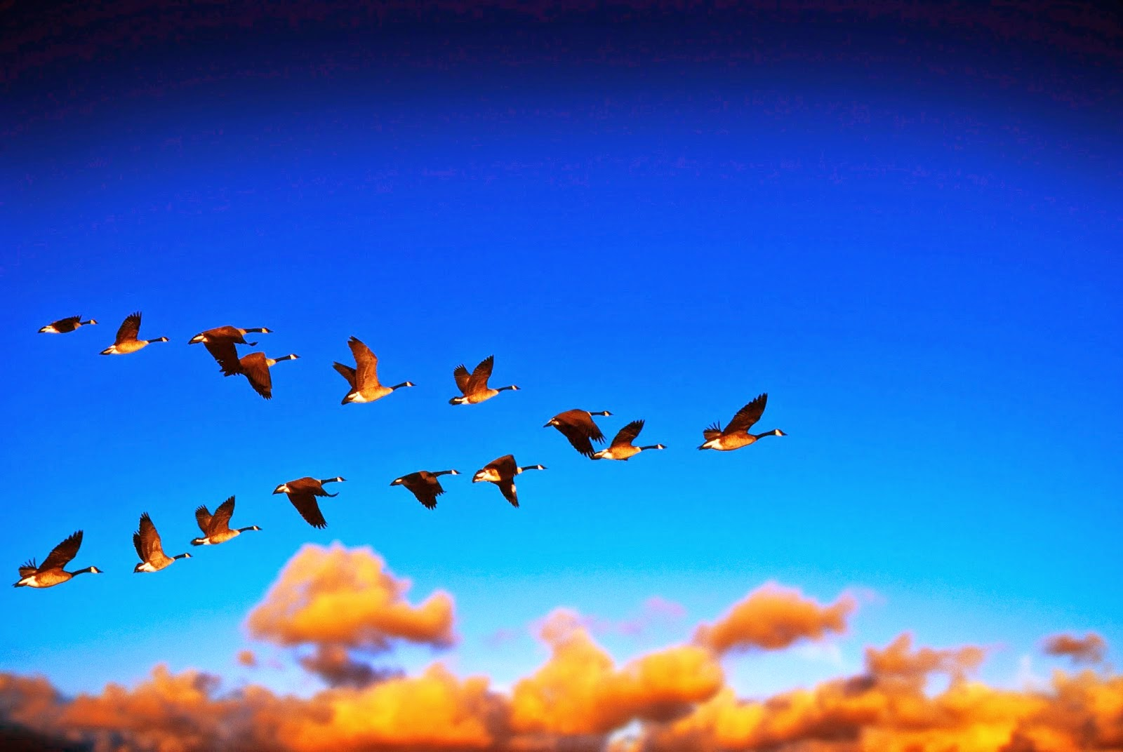 Group of birds flying together